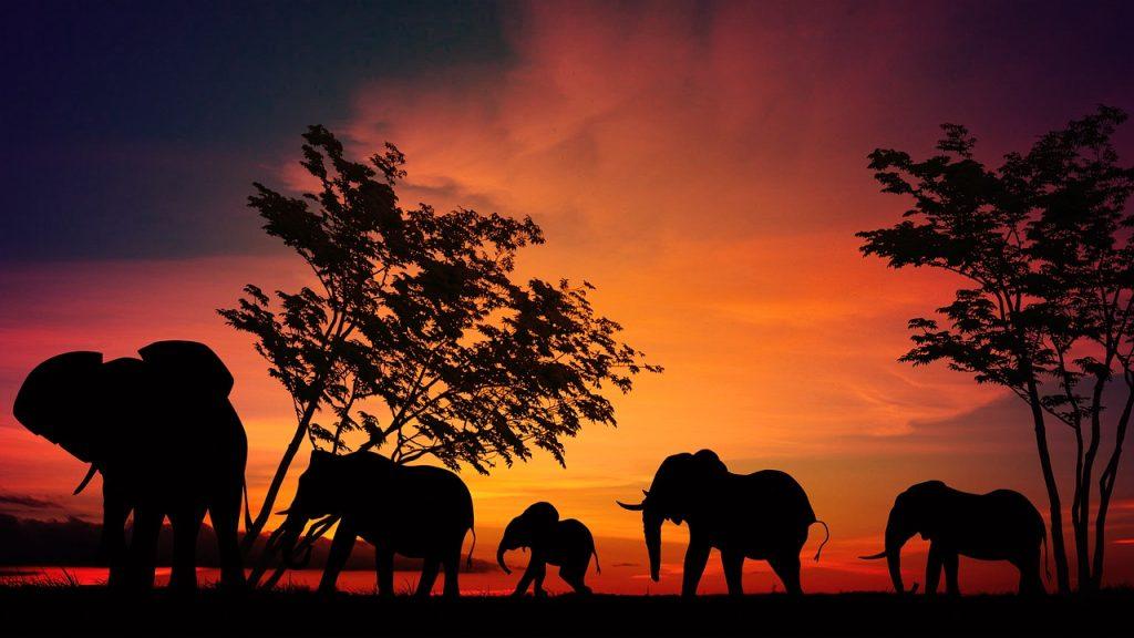 Africa Safari en kenia
