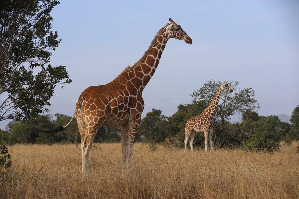 Parque Nacional de Samburu