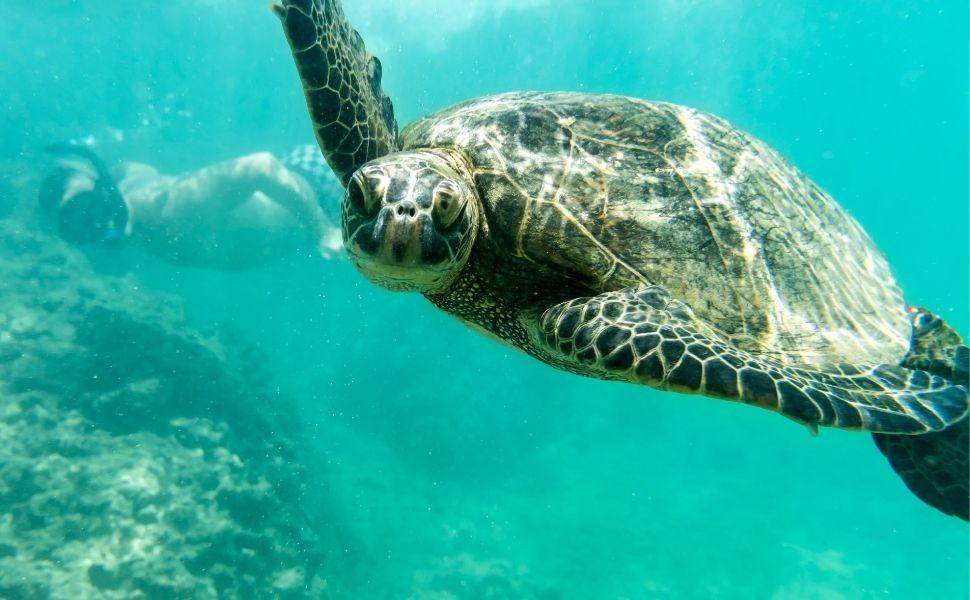 Nadar con Tortugas marinas en Riviera Maya